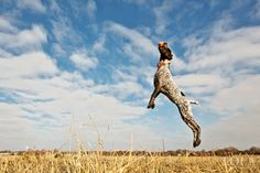 Gallery » Lola Every Day these are some really beautiful photos of his dog!