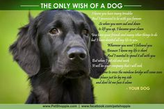 The only wish of a dog.