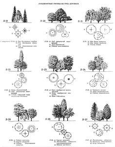 Группы из растений