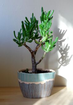 Blog of Elizabeth Pechacek: (love her comment.) This is my favorite plant. I made this pot especially for it and I sometimes pick it up and kiss it's weird little succulent sucker l...