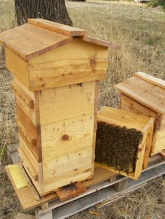 Harvesting honey from a Warre Hive