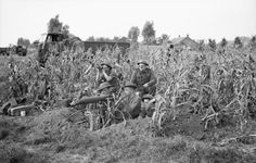 A Vickers machine-gun team of 7th Royal Northumberland Fusiliers, 59th (Staffordshire) Division in position in a field of corn at Someren in The Netherlands, 21 September 1944.