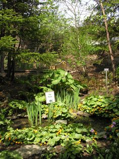 Bog garden...great for bees to get water too. . .