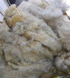 Raw fleece brought home from work.  Follow my journey as I learn to clean the fleece and start to spin
