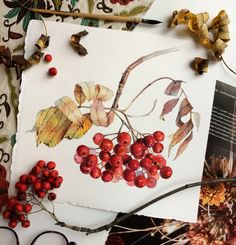 Рябина on Behance Watercolor Plants, Watercolor Artwork, Watercolor Artists, Watercolor And Ink, Botanical Drawings, Botanical Art, Botanical Illustration, Watercolor Illustration, Watercolor Inspiration