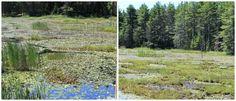 swamp\high grass