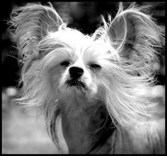 Everyone has bad hair days, even dogs