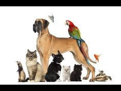 Pets and Animals Classifieds to buy sell pets. Free Pet Ads for worldwide locations. List of 10 Best Pets Classified Sites for Post ads for dogs,cats,kitten, puppies. Pets and animals for Sale Online. Reptiles, Mammals, Baby Animals, Funny Animals, Pet Dogs, Dog Cat, Dogs Pitbull, Pet Sitter, National Pet Day
