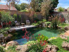 Natural Swimming Ponds, Small Swimming Pools, Small Pools, Swimming Pools Backyard, Swimming Pool Designs, Pool Landscaping, Lap Pools, Indoor Pools, Pool Decks