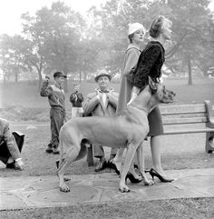 So many things I like about this pic.... vintage, the clothing, kids playing in park, the goofy look on the guys face while he adjusts his tie...... AND A GREAT DANE!!!! LOL