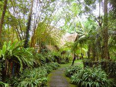 6/26(月)バリ島ウブドのお天気は雨。室内温度27.0℃、湿度81%。日曜日は夕方までずーっと雨!今日も小雨が降っています。この時期にこんなに雨が降る事はないはずなのに、、、