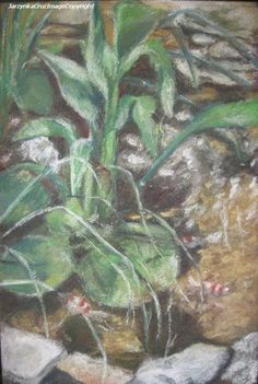 Original Art Work Koi Pond pastel drawing by PrussianBlueStudio, $500.00
