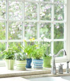 striped pots in kitchen window