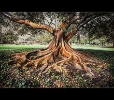 Magnificent Tree by Bianca K, via 500px