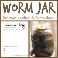 How to make a worm jar at home and a simple (and free) science observation sheet.