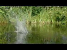 Un tour du monde  à vol d'oiseau.Film doc.(source Arte)
