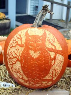 """""""My pumpkin depicts a great horned owl sitting on a branch of a tree in front of a full moon. I love to make linoleum prints. I used my Spee... Owl Pumpkin Carving, Pumpkin Carving Contest, Amazing Pumpkin Carving, Pumpkin Art, Pumpkin Ideas, Pumpkin Designs, Halloween Jack, Halloween Pumpkins, Halloween Crafts"""