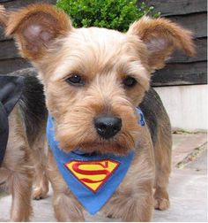 Superpup Superman Blue Dog And Cat Bandana by zukiestyle on Etsy, £5.50