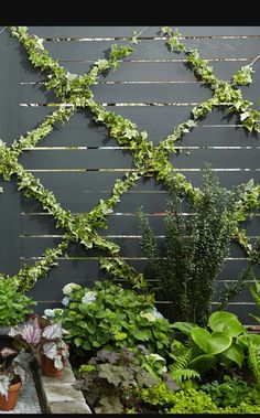 Diagonal wire, for climbing plants