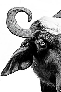 close up and white about life Close Up, Moose Art, Studio, Drawings, Poster, Photography, Animals, Life, Image