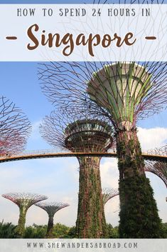 Check out these things to do in Singapore on a budget, including Singapore sights, & where to stay in Singapore on a budget. Singapore Sights, Singapore Travel Tips, Visit Singapore, Cool Places To Visit, Places To Travel, Places To Go, Travel Destinations, China Travel, Bali Travel