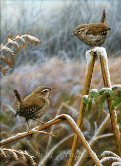 Wildlife Artist-Nigel Artingstall............. lbxxx.