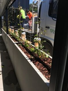Commercial building projects are often faced with a decision to choose between GRC concrete planters or some form of blockwork or formwork as part of the landscaping for their projects. Concrete Planters, Planter Boxes, Commercial, Australia, Landscape, News, Building, Projects, Log Projects