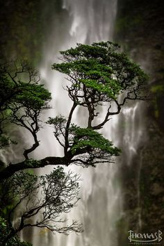 Devils Punchbowl Waterfall, Arthur's Pass National Park, New Zealand