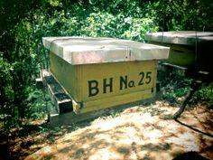 beekeeping :)