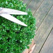 A boxwood hedge is an evergreen shrub that has tiny green leaves. This hedge grows slowly and typically becomes very thick.  These characteristics make it one of the best hedges for designing shapes and animals out of the hedge. Boxwood hedges are very hardy and are easy to take care of.   Animal designs are popular for boxwood hedges. Even an...