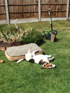 Jack Russell's are just to cool for words! Parson Russell Terrier, Jack Russells, Little Dogs, Four Legged, Some Pictures, Terriers, Cool Stuff, Pets, Children