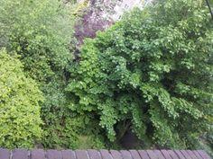 photo: Bart Gorter  Backyard from my balcony. Rotterdam.
