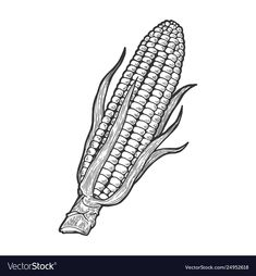 Buy Corn Maize Sketch Engraving Vector Illustration by AlexanderPokusay on GraphicRiver. Corn maize vegetable plant on branch sketch engraving vector illustration. Plant Sketches, Tree Sketches, Animal Sketches, Rose Flower Sketch, Flower Sketches, Bee Sketch, Hand Sketch, Free Vector Images