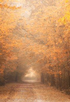 Foggy morning - http://facebook.com/photonikko