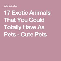 17 Exotic Animals That You Could Totally Have As Pets - Cute Pets