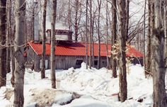 Cabane à sucre au toit rouge