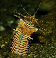 Ferocious 10-Foot Bobbit Worm Is the Ocean's Most Disturbing Predator - Wired Science