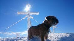 Wenn Sie den Winterurlaub mit ihrem Hund voll auskosten, verbringen Sie viel Zeit an der frischen Luft und im Schnee. Die Hundeloipen bedeuten auch für Ihren vierbeinigen Freund eine Menge Anstrengung – gehen Sie sicher, dass Ihr Tier die Strecke auch problemlos bewältigen kann. Doch auch auf no…