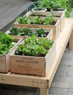 Já pensou em ter a sua própria Horta em casa? Além da praticidade de ter em seu próprio jardim algumas ervas para cozinhar dá um toque ecológico e especial para sua decoração!