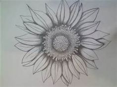 Pencil Drawings of Sunflowers Template - Bing Images