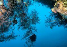 Ayvalık dalış okulu - ida dalış merkezi #scuba #scubadiving #diving #underwater #dalisnoktam #bali🌴 #balidiving #tulamben #baliunderwater #idadalismerkezi www.idadiving.com