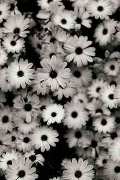 Google Image Result for http://4iphonewallpapers.com/iphone-4-wallpapers/main/2012_04/black-and-white-flowers.jpg