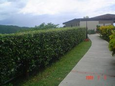 Fotos de Cercas Vivas. Alajuela