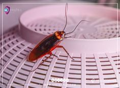 How to kill night #cockroaches? Is this what you are thinking about now and looking for a quick and safe solution to eliminate cockroaches scattered in every corner of the house?! Well, cockroaches are the most dangerous home pests and this is because of their ability to reproduce at a rapid rate and, worse, their ability to transport a range of serious diseases and epidemics. Pest Control Services, Corner, Range, Night, House, Cookers, Home, Homes, Houses