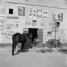 Horse waiting outside a bicycle repair shop in 1949 Italy. Photo: Cuchi White