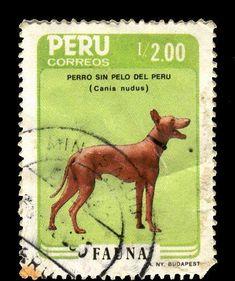 Afbeeldingsresultaten voor perro sin pelo del peru book