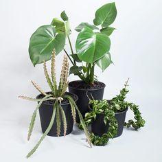 20 Cheeky Questions: Emma Sadie Thomson - The Planthunter Potted Plants, Cactus Plants, Plant Pots, Plant Order, Landscape Design, Landscape Architecture, Fiddle Leaf Fig, Monstera Deliciosa, Interior Plants