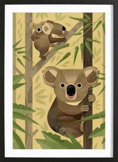 Koala - Dieter Braun - Affiche sous cadre en bois