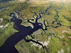 Image detail for -Florida Everglades