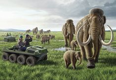 Woolly Mammoths at Pleistocene Park